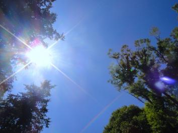 紫外線写真
