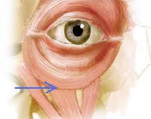 目の下の筋肉の境目がある場所