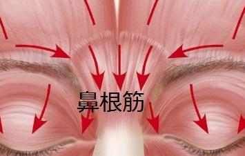 鼻根筋の位置